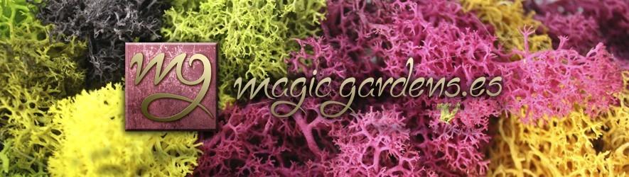 Plantas preservadas, misma frescura de una planta natural pero mucho duradera.